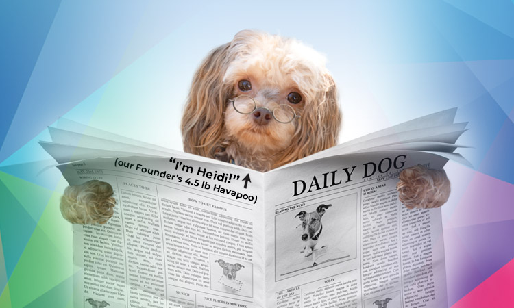 Kaleidoscope Mobile News Header: our founder's dog, Heidi, holding newspaper